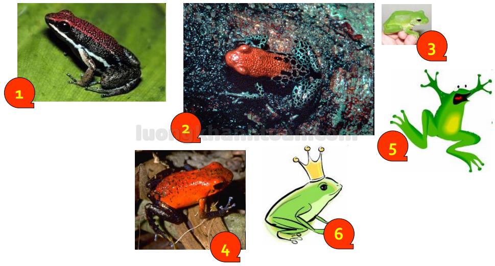 Bí quyết ăn thịt ếch